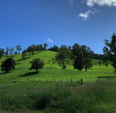 Bellbrook greens_Macleay Valley Coast