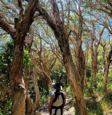 Green Island Walking Track_Macleay Valley Coast